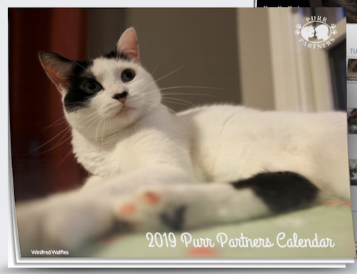 Cats & Kittens for Adoption | Purr Partners