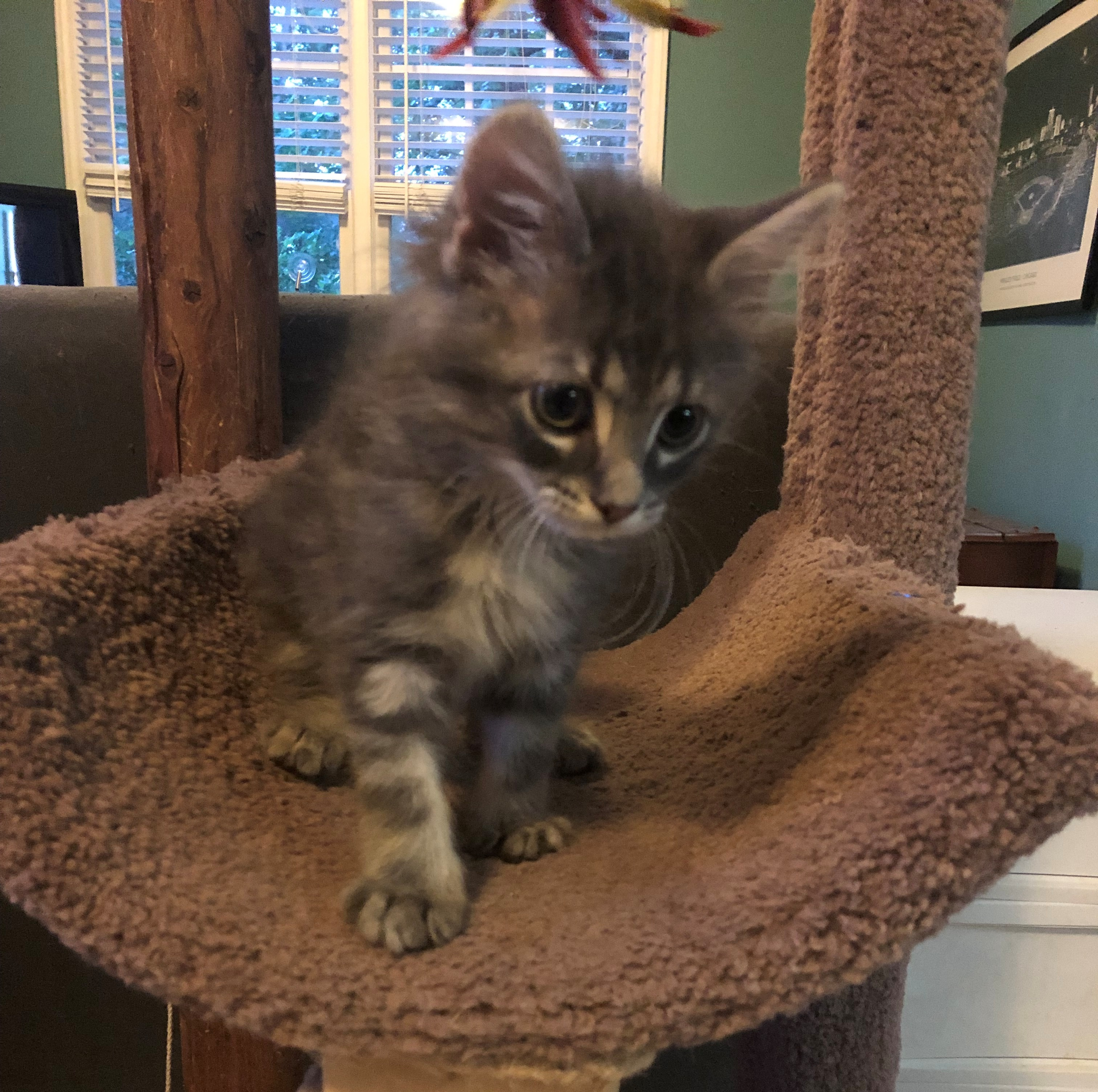 c69750678 Cats for Adoption | Purr Partners