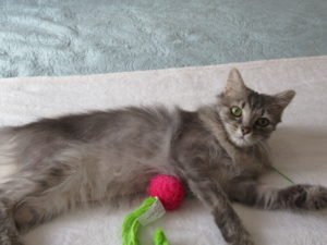 Cats for Adoption | Purr Partners