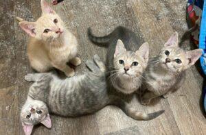 M kittens